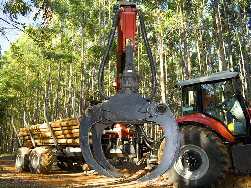 Garra Florestal